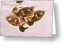 Swimming Ducklings Greeting Card