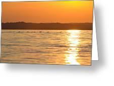 Swimming Into The Sun Greeting Card