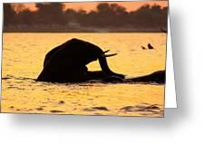 Swimming Kalahari Elephants Greeting Card