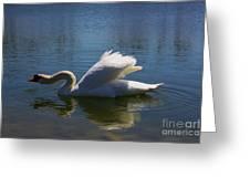 Swimming Swan Greeting Card