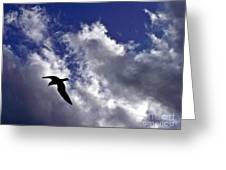 Swimming Through The Sky Greeting Card