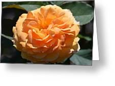 Swirling Peach Rose Greeting Card