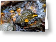 Swirling Stream Of Leaves  Greeting Card
