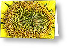 Swirling Sunflower Bloom Greeting Card