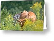Swishing Tails Greeting Card