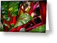 Swiss Chard Forest Greeting Card