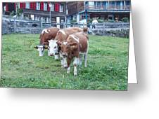Swiss Cows Greeting Card