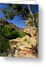 Sycamore Canyon Greeting Card
