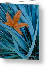 Sycamore Leaf And Sotol Plant Greeting Card
