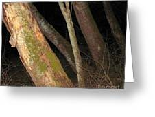 Sycamore Nightscape Greeting Card