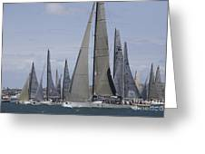 Sydney To Hobart Yacht Race Greeting Card