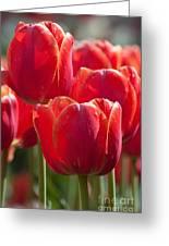 Symbolic Tulips Greeting Card