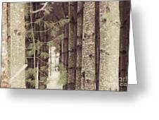 Symmetrical Evergreens  Greeting Card