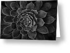 Symmetrical Succulent Greeting Card