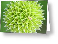 Symmetry In Green Greeting Card by Julie Cameron