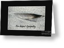 Sympathy Feather Greeting Card