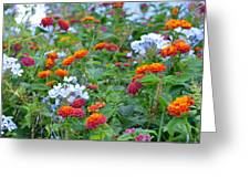 Symphony Of Colors Greeting Card