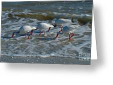 Synchronized Beach Combing Greeting Card