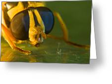 Syrphid Eyes And Antennae Greeting Card