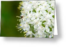 Syrphid Feeding On Alliium Blossom Greeting Card