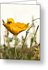 Syrphid Fly And Poppy 2 Greeting Card