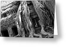Ta Prohm Roots And Stone 03 Greeting Card