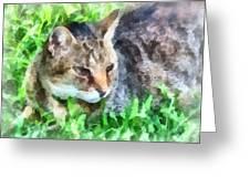 Tabby Cat Closeup Greeting Card