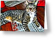 Tabby Cat On Newspaper - Catching Up On The News Greeting Card