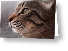 Tabby Cat Painting Greeting Card