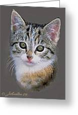Tabby  Kitten An Original Painting For Sale Greeting Card