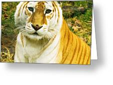 Tabby Tiger I Greeting Card