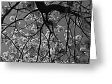Tabebuia Tree 1 Greeting Card