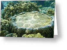 Table Top Coral Greeting Card