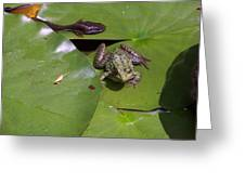 Tadpole And Frog Greeting Card