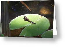 Tadpole On Lily Pad Greeting Card