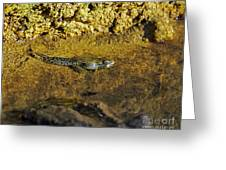 Tadpole Tail Greeting Card