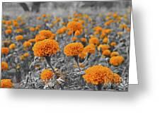 Tagetes Erecta / Aztec Marigold Flower Greeting Card