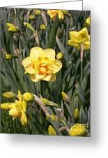 Tahiti Double Daffodil Greeting Card