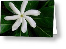 Tahitian Gardenia Greeting Card