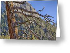 Tahquitz And The Pine Greeting Card