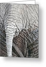 Tail Of African Elephant Greeting Card