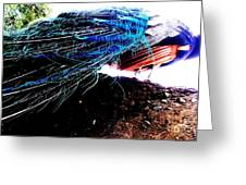 Tail Of Peacock Greeting Card