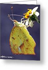 Tailed Orange Butterfly Greeting Card