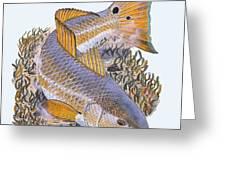 Tailing Redfish Greeting Card