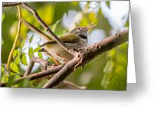Tailor Bird Greeting Card