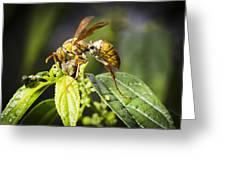 Taiwan Hornet Feeding On A Caterpillar Greeting Card