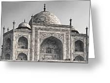 Taj Dressed In White Greeting Card