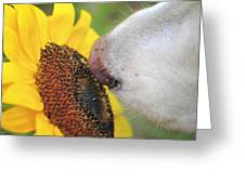 Take Time To Smell The Sunflowers Greeting Card
