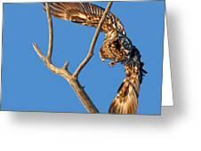 Taking Flight - Immature Bald Eagle Greeting Card