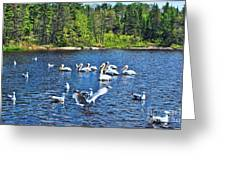 Taking Flight In Ontario Greeting Card